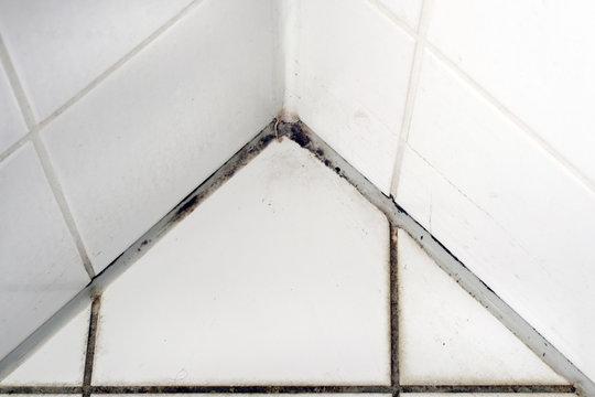 Mould in a white bathroom on the tiles and the silicon