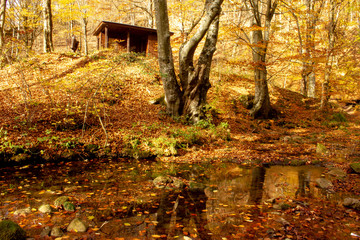 River Grza in autum. Beautiful small river surrounded with forest in nature park Grza.