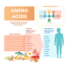 Amino acids vector illustration. List with food and essential acids.