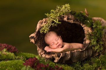 Baby sleeping in hollow tree trunk