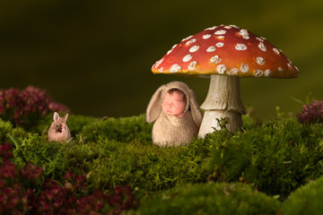 Baby rabbit sleeping in toadstool backdrop