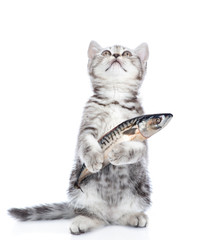 Kitten holding a fish in its paw and looking up. isolated on white background