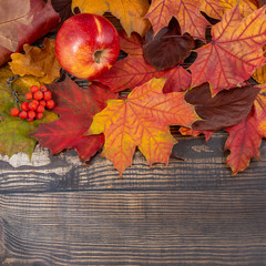 Red apples and rowan berries with maple leaves