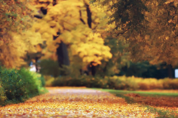 landscape forest sunny autumn day / yellow trees in the landscape Indian summer autumn October