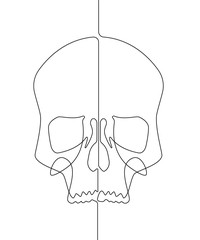 Human Skull Continuous Vector Line Art Illustration III