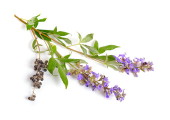 Vitex agnus-castus, also called vitex, chaste tree or chastetree, chasteberry, Abraham's balm, lilac chastetree or monk's pepper isolated.