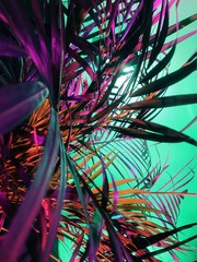 Close up of colorful palm leaves