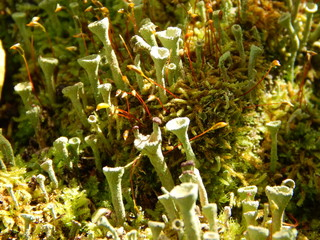 Forest moss. Macro photography