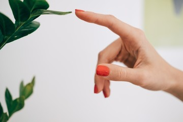 Close up of woman's finger reaching to touch the leaf of a tropical plant