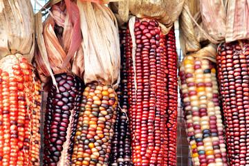 Close up of flint corn