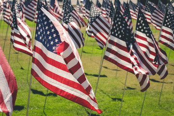 American flags on grassy field