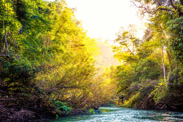 Beautiful green forest and the river at sunrise in the morning, Bright Natural Background