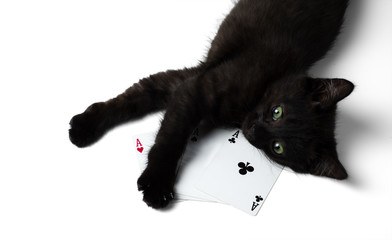 Black kitten lying on a square of four aces. Isolated on a white background.