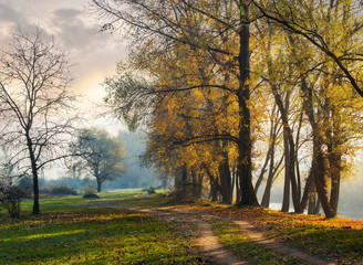 autumn scenery near the river. path along the embankment. tall trees in golden foliage on the bank