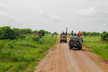 Safari in Serengeti National Park, Tanzania