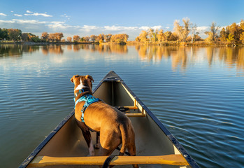 dog in a canoe on a calm lake