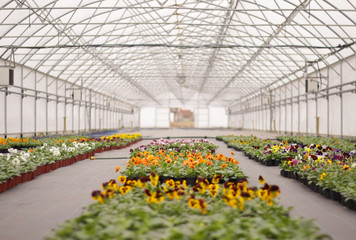 Greenhouse with climate control system cultivating pot flowers