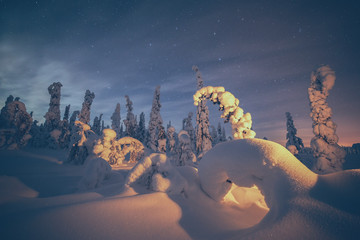 Snow covered trees underneath the night sky