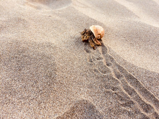 hermit crab on beach  - crab inside shell  -