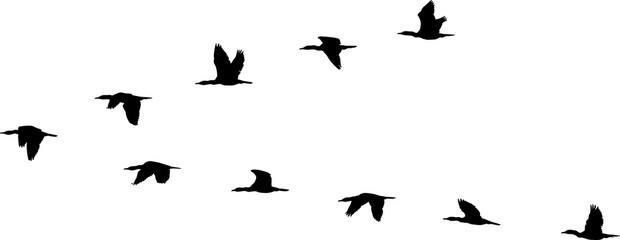 flight formation of birds