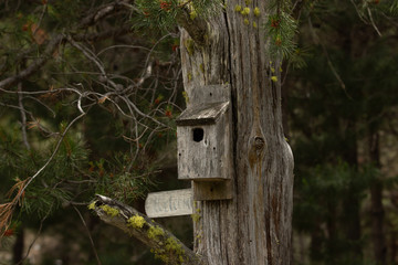 Rustic grey bird house on pine tree, faded welcome sign.