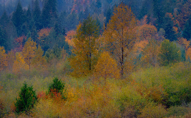Autumn Colors Washington State