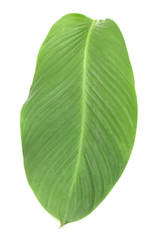 Tropical leaves on white background.