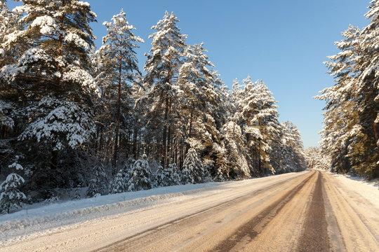 Trees in winter ,