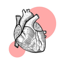 Vector illustration. Human heart.