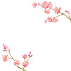 梅 水彩イラスト