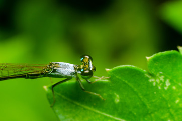 Damselfly on green grass