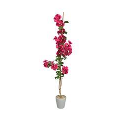 red flower on pot