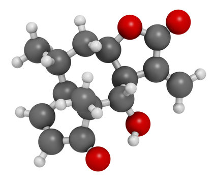 Helenalin sesquiterpene lactone molecule. Toxin found in Arnica montana. 3D rendering. Atoms are represented as spheres with conventional color coding: hydrogen (white), carbon (grey), oxygen (red).