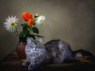Kitty  with bouquet of dahlia flowers