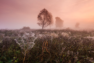 Foggy dawn on the field with cobwebs in autumn
