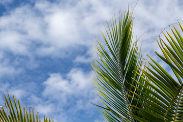 Fluffy green palm leaf on blue sky background. Relaxing tropical landscape photo. Exotic place for vacation.