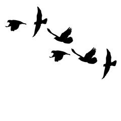 set of flying birds silhouettes