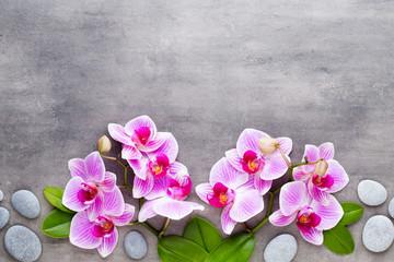 Papiers peints Orchidée Beauty orchid on a gray background. Spa scene.