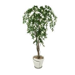 white flower plant