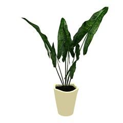 big leaf flower on pot