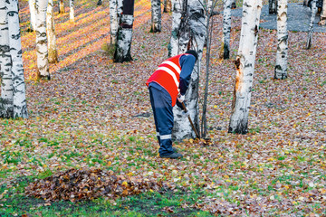 Man in work clothes with rake removes old leaves in the Park in autumn,