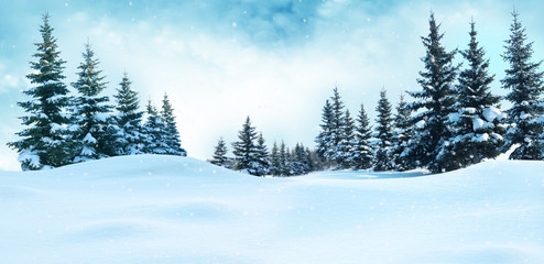 Wall Murals Light blue Beautiful winter landscape with snow covered trees.Christmas background