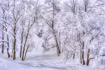 Winter landscape with snowy trees along the winter park - winter snowy scene in vintage tones
