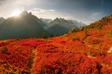 Foto op Plexiglas Rood traf. Red autumn Chamonix in the Alps
