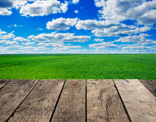 Fototapete - Image of green grass field and bright blue sky