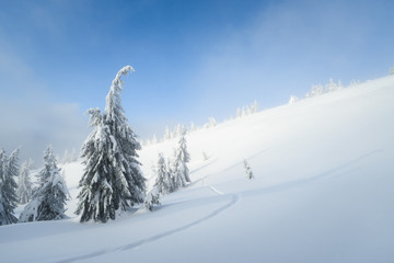 Fototapete - Winter landscape in the mountains with fog