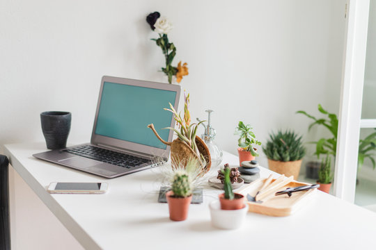 Laptop and variation of succulent plants at home