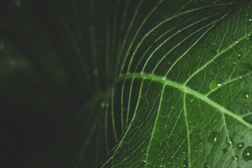 water drops on green leaf macro photo