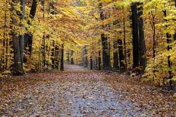 Fall foliage along roadway.