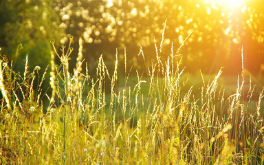 Wall Mural - Beautiful plant background at sunset. Hot sun rays on a radiant clearing of the orange sky